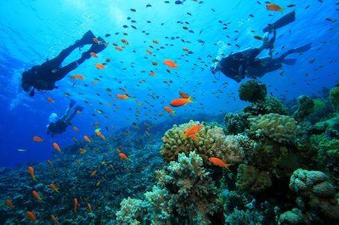 komodo liveaboard snorkeling