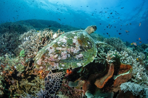 komodo snorkeling tours