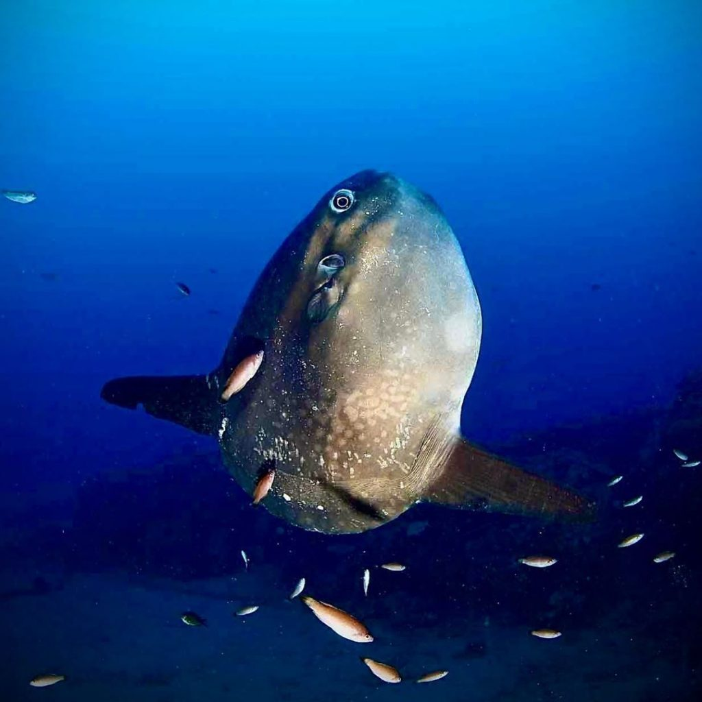 Bring 5mm Wetsuit to Dive with Mola Mola Bali