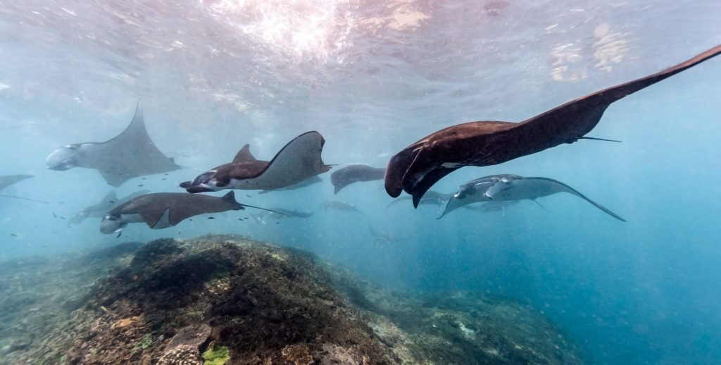 Komodo National Park Snorkeling, Exploring Big Creatures & Beautiful Reefs
